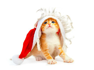 Котёнок на новый год