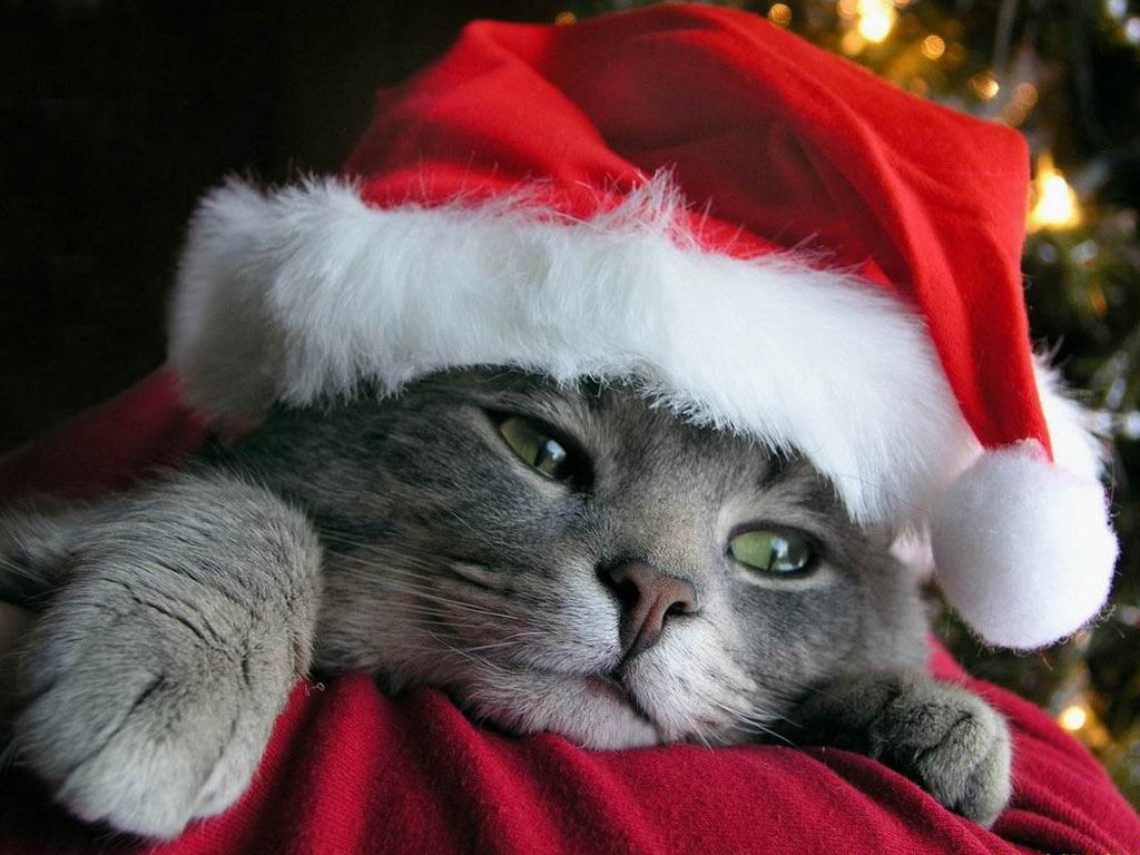 Милый котенок лучший подарок на